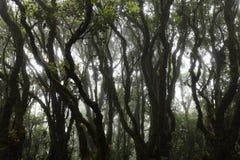 Voorwaarde van het bos Stock Foto's