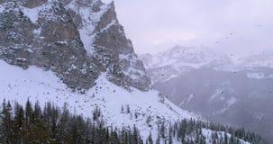 Voorwaartse antenne over de troep die van de kraaivogel over hout bos sneeuwberg vliegen Bewolkt slecht donker mistig weer De win stock video