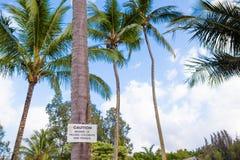 Voorzichtig zijn van dalend kokosnotenteken Stock Fotografie