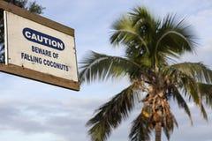 Voorzichtig zijn van dalende kokosnoten Royalty-vrije Stock Afbeeldingen