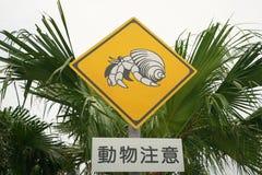 Voorzichtig zijn van Kluizenaarkrab bij Miyako-eiland, Okinawa, Japan stock fotografie
