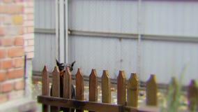 Voorzichtig zijn van kwade hond stock footage