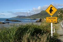 Voorzichtigheid, Pinguïnen Stock Afbeelding