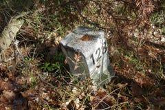 Voorzie in het bos van wegwijzers Stock Foto
