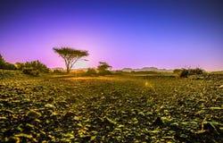 Vor dem Sonnenaufgang Lizenzfreies Stockfoto