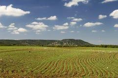 Vor kurzem gepflanztes Feld Stockfoto
