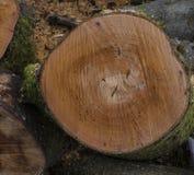 Vor kurzem schneiden Sie den Baumstamm, der Ringe zeigt und sah Kennzeichen Lizenzfreies Stockfoto