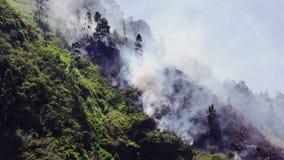 Voranbringender Forest Fire In The Wind stock footage