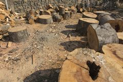 Vorbereiten des Holzes für Brennstoff Lizenzfreie Stockfotos