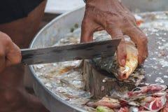 Vorbereiten eines Fischfilets Stockfotografie