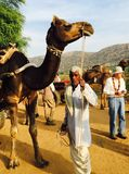 Vorbereiten für eine Kamel-Fahrt stockfotografie