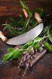 Vorbereitung des Salbeis für das Kochen Lizenzfreie Stockbilder