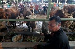 Vorbereitung für Eid al-Adha in Indonesien Lizenzfreie Stockfotografie
