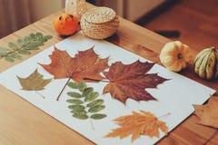 Vorbereitungen für Herbsthandwerk mit Kindern Herbarium von getrockneten Blättern stockfoto