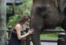 Vorbildliche Frau, die einen großen Elefanten umarmt Stockbild