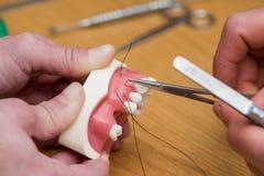 Vorbildliche medizinische Implantate, welche die Ausrüstung prüfen Stockbild