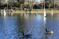 Vorbildliche Segelboote in einem Parkteich in Paris Vögel fliegen, Eltern gehen mit Kindern, Gänse in einem Teich stockfoto