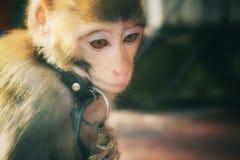 Vorbildliches Monkey lizenzfreie stockfotos