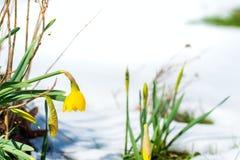Vorboten des Frühlinges Stockfotos