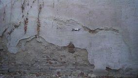 Vorderansicht des faltbaren Brummens schwebend vor der alten Wand stock video footage