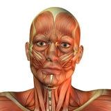Vorderansicht des Gesichtes des Muskelmannes Stockfotos