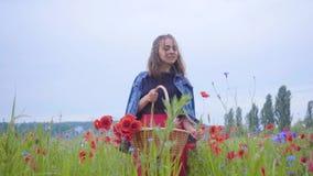 Vorderansicht des hübschen Mädchens gehend auf dem Mohnblumengebiet, das Blumen im Weidenkorb erfasst Verbindung mit Natur Gr?n stock video