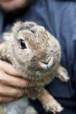 Vorderansicht des Kaninchens Stockfoto