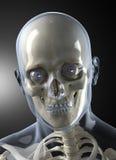 Vorderansicht des männlichen menschlicher Kopf-Röntgenstrahls Stockfoto