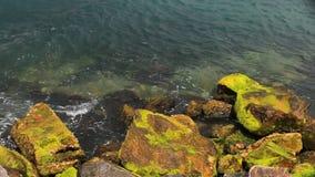 Vorderansicht von den Meereswellen, die auf Felsen im Sonnenuntergang brechen stock footage