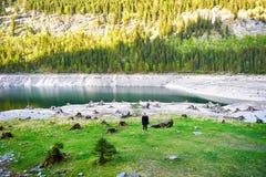 Vorderer Gosausee湖独特的超现实的看法有妇女的背景的 水、宁静和树桩精采看法  免版税图库摄影