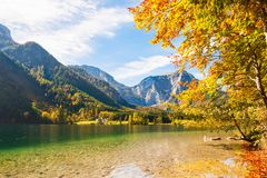 Vorderer Langbathsee lake in Austrian Alps. Yellow autumn trees on the coast of Vorderer Langbathsee lake in Austrian Alps Royalty Free Stock Image