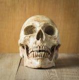 Vorderer Schädel auf hölzernem Hintergrund Lizenzfreies Stockfoto