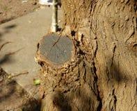Vordergrund eines Baumstammes Stockfoto