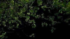 Vordergrundbäume, die im Wind mit Matt-V3 durchbrennen stock video footage