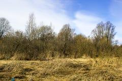 Vorfrühling auf dem Gebiet in Russland Lizenzfreie Stockbilder