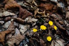 Vorfrühling in Deutschland-Wald Stockfoto