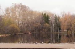 Vorfrühling im Park Stockfoto