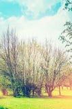 Vorfrühlingsgarten oder -park mit frischer Baumblüte Stockfotos