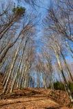 Vorfrühlingswald Stockbilder