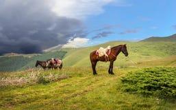 Vorgespannte Pferde in einem Gebirgstal des Nationalparks stockbild