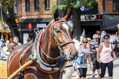 Vorgespanntes Pferd, Zakopane Lizenzfreies Stockfoto