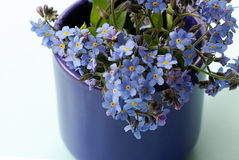 Vorget-ich-nicht Blüten Lizenzfreie Stockbilder