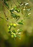 Vorgewählte Oliven, Olivenöl, Andalusien, Spanien Lizenzfreie Stockbilder