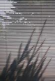 Vorhänge und Baumschatten Stockbild