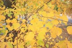 Vorhang von Blättern Stockbild