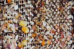 Vorhang von Seeoberteilen Lizenzfreie Stockfotos