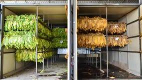 Vorher und nachher vom Tabakblatt in der Ofenfabrik stock video