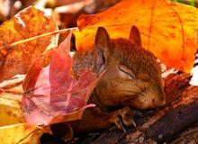 Vorige herfst Royalty-vrije Stock Foto