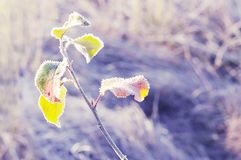 Vorige herfst bladeren in een het fonkelen vorst de verandering van de herfst en de winter Natuurlijke achtergrond stock foto's