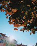 Vorige herfst zonstralen royalty-vrije stock foto's